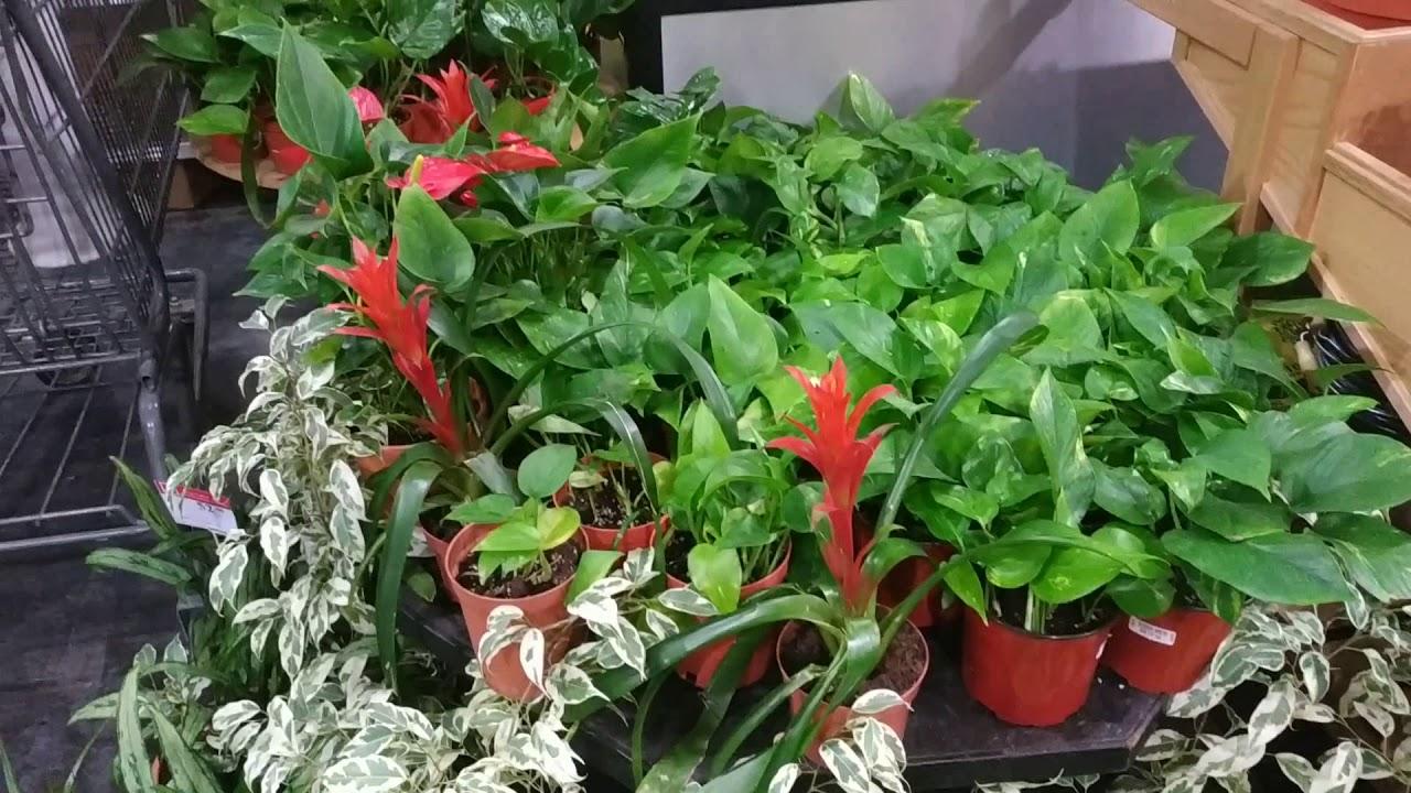 أسماء نباتات الزينة المناسبة للمنزل نباتات الظل والتنسيق الداخلى Youtube