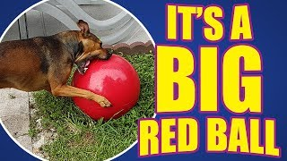 Sometimes simple is best! | DOG TOY REVIEWS | Jolly Pets 14-Inch Push-n-Play Dog Toy