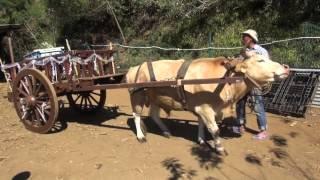 INFOS EN CONTINU : La Ferme Bellevue au Dos d'âne.