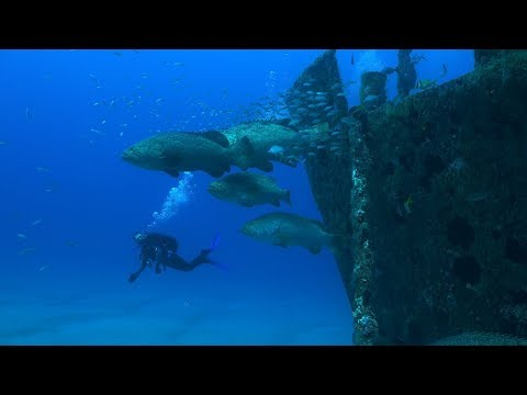 Florida Travel: Why You Should Dive Florida's Treasure Coast