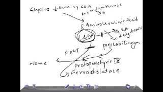 Medical Video Lecture: Lead poisoning on Heme synthesis, Biochemistry