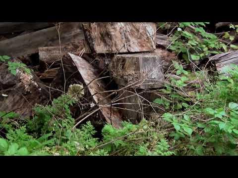 Oak Island Treasure Found? September 9, 2020 - YouTube