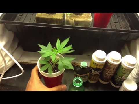 How to have a better chance to get your clones rooting