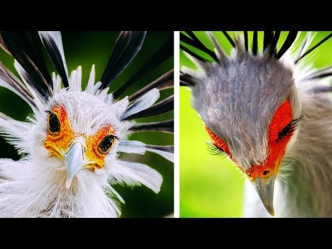 10 Most Beautiful Birds Of Prey In The World