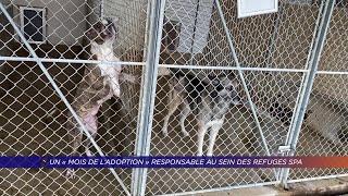Yvelines | Un «mois de l'adoption» responsable au sein des refuges SPA