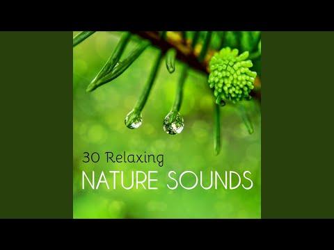 Top Tracks - Spiritual Health Music Academy