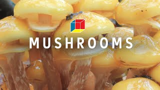 Mushrooms Might Save the World