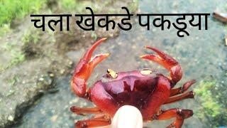 सफेद खेकडॆ/कोकणातील खेकडे/crabs hunting/crabs catching/crabs/crabs trap