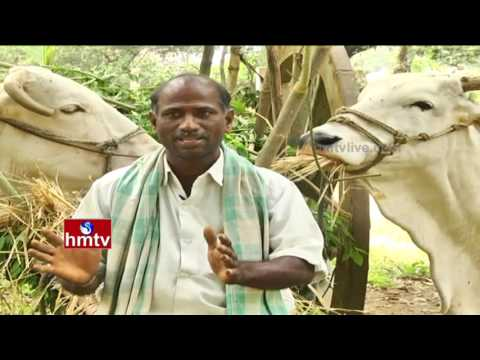 Success Story Of East Godavari Farmer | Fruit Cultivation Information Guide | Nela Talli | HMTV