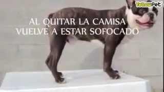Camiseta tranquilizante para perros (fuegos artificiales, cohetes, tormentas...)