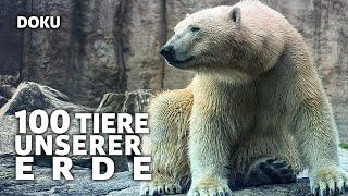 100 Tiere unserer Erde (Dokumentation in voller Länge, auf deutsch, kostenlos ansehen, GRATIS)