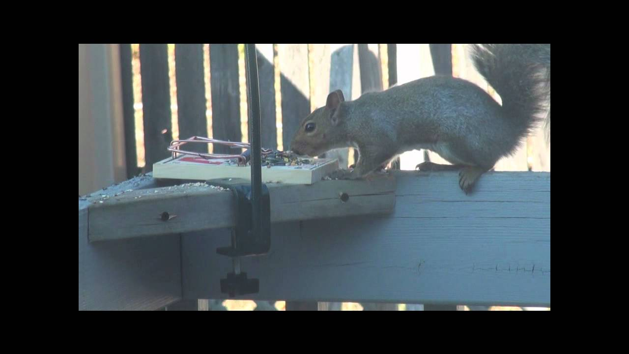 Squirrel Trap - Turn Away (Graphic!!!) - YouTube