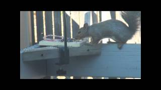 Squirrel Trap - Turn Away (Graphic!!!)