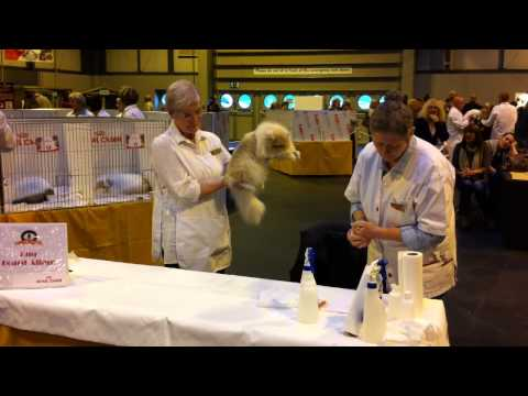 Supreme Cat Show 2013 - Judging 'Best Persian Adult'