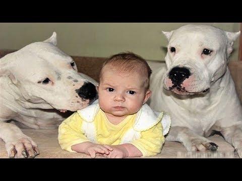 Tags of dog babysitter - Cat Meme Tube - pet babysitter