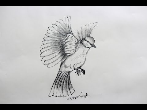 How To Draw A Beautiful Love Bird Step By Step Pencil Sketch Youtube