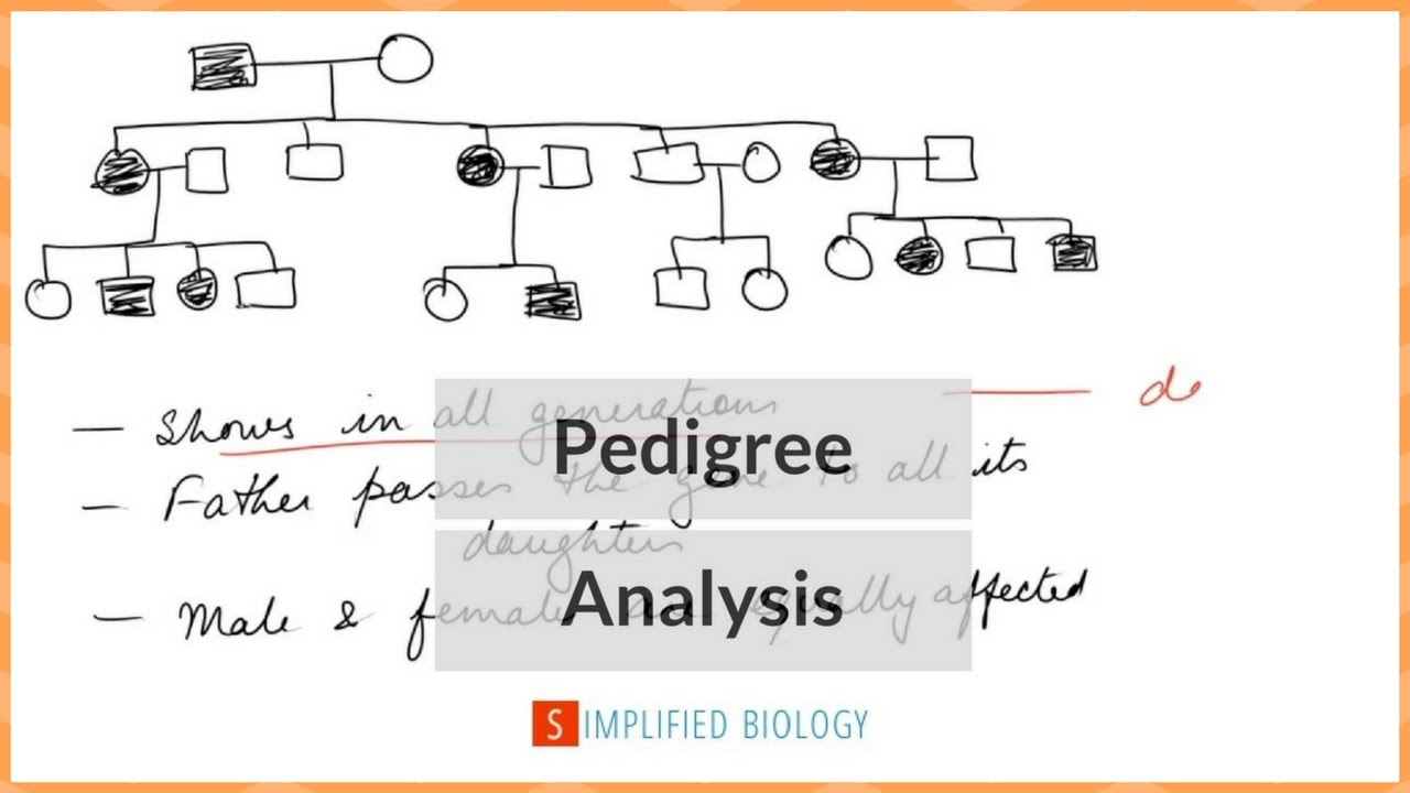 pedigree chart explanation [ 1280 x 720 Pixel ]