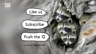 Enlightened raccoon at back door