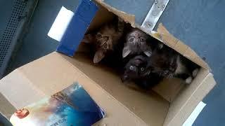 Больше сотни пассажиров сняли с электрички из-за коробки с котятами