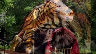 เล่าตำนาน เขาเสือสมิง