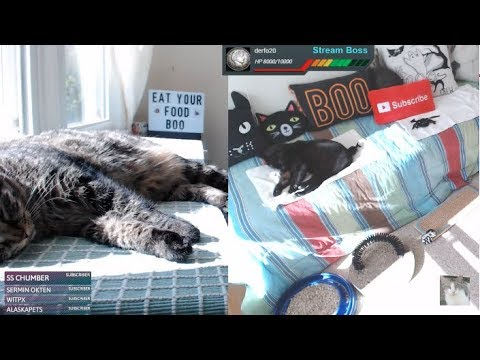 BOO'S Room *Merry Monday* LIVE STREAM 🔴 LUCKY FERALS Multi-Cam Multi-Cat Livestream With Giveaway!