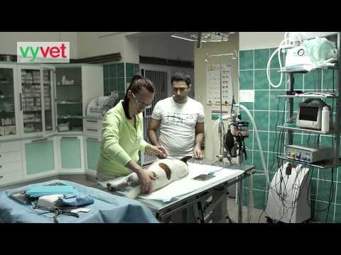vyvet veterinární klinika Vyškov