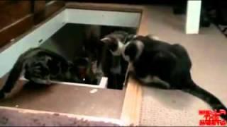 komik kedi videosu izle