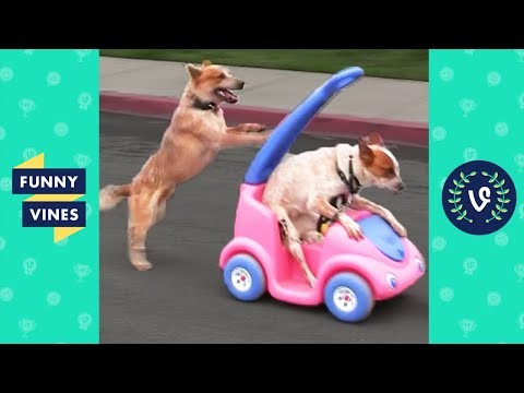 TRY NOT TO LAUGH - Cute FUNNY ANIMALS | Funny Videos March 2019