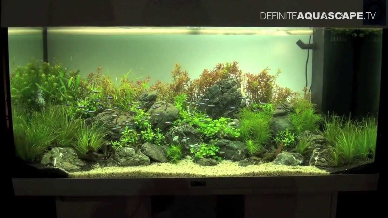Aquascaping Aquarium Ideas From Zoobotanica 2013 Pt 1