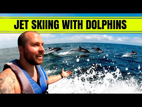 JET SKIING WITH DOLPHINS IN ORANGE COUNTY!!