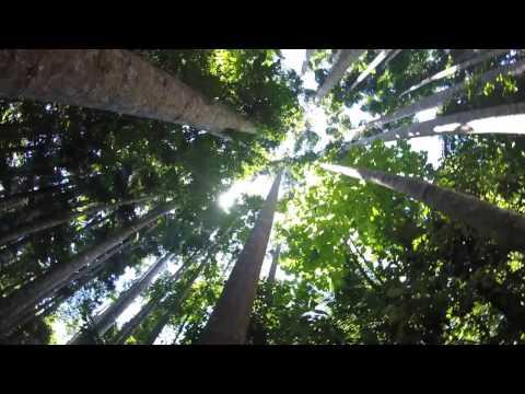 Australia daily - Paronella Park
