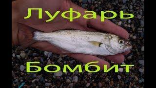 Рыбалка на луфаря в черном море - Рокфишинг )) Бешеный клёв на колебалки