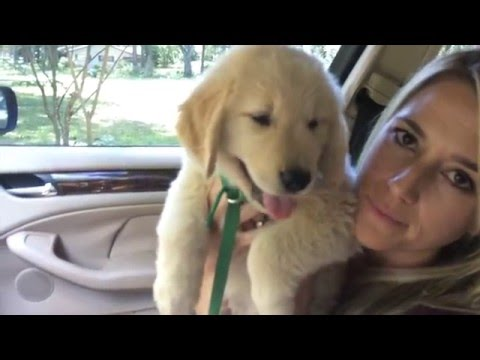 Surprised Kids with Golden Retriever Puppy Chief's Home