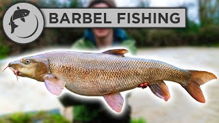 How To Catch BAŔBEL - A Simple Guide To Barbel Fishing