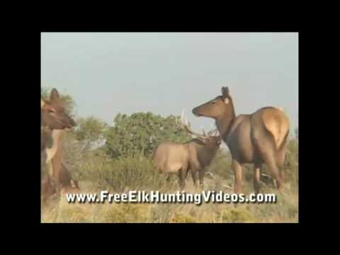 Great Hunting Videos - AfricaHunting.com from YouTube · Duration:  4 minutes 48 seconds