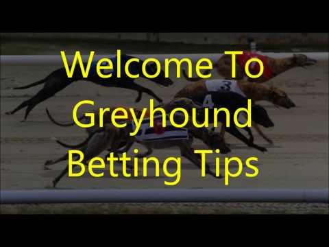Greyhound Racing Betting Tips #1