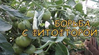 Болезни ПОМИДОРОВ. Защита томатов от ФИТОФТОРОЗА. Как БОРОТЬСЯ с фитофторой(, 2014-07-05T08:02:52.000Z)