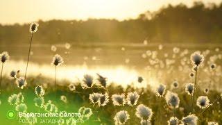 Без комментариев  Васюганские болота 3 | Живая Планета