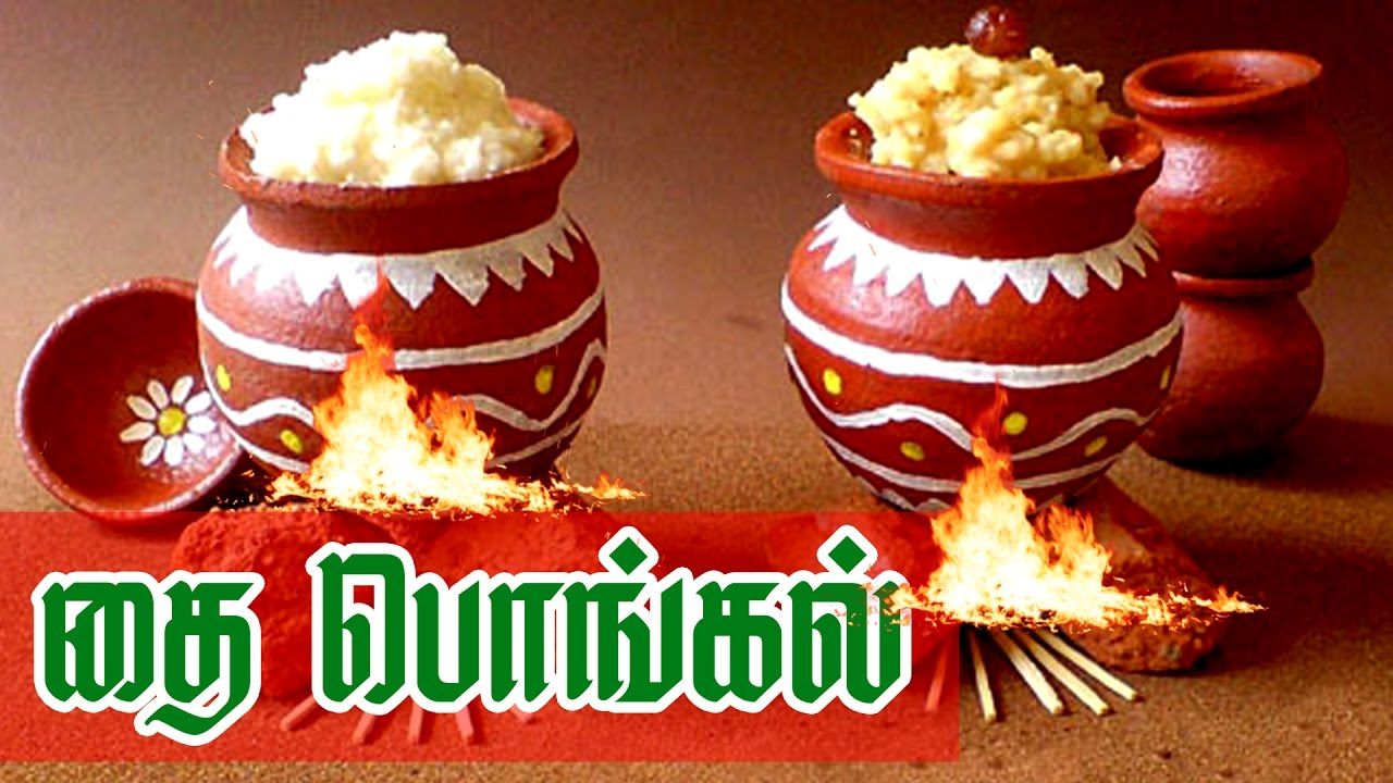 Pongal Documentary In Tamil Pongal Festival Celebration