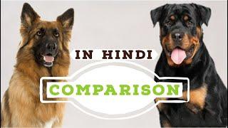 Dogs comparison in Hindi | German Shepherd Vs Rottweiler | GSD | Dog Comparison