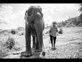WALKING WITH ELEPHANTS, BATHING ELEPHANTS  ☼  Family Travel in Thailand
