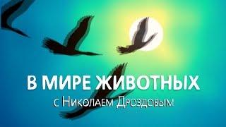 В мире животных с Николаем Дроздовым  Выпуск 22. 04 сентября 2019.