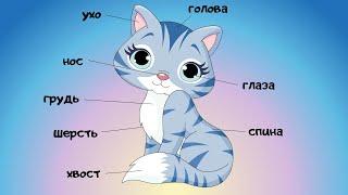 Части тела животных для детей Учим животных Видео для малышей 2 серия