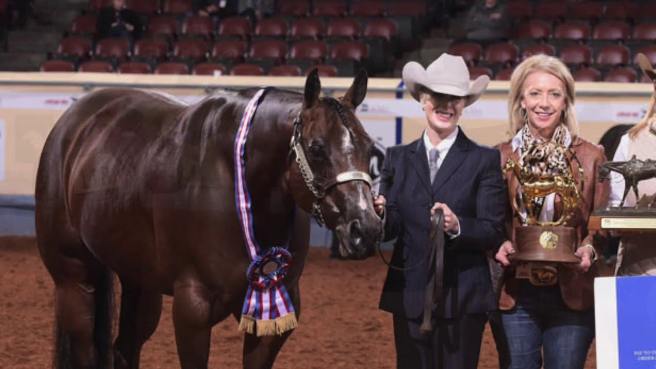 2018 AQHA Amateur Performance Halter Mares