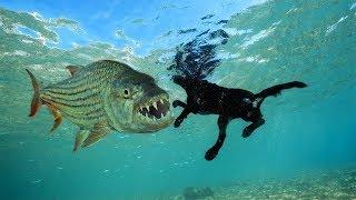 FISH That Eat LAND Animals!