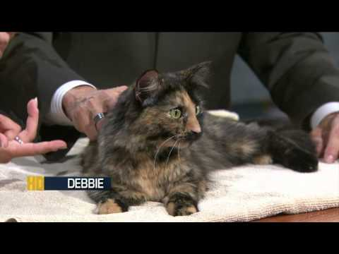 Pet Of The Week Sept. 1, 2011: Debbie (Tortoiseshell Cat)