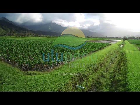 SEARCH Hawaii visits Kauai