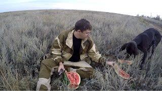 #10 Ходовая Охота Осенью. Охота по Перу с Подружейной Собакой МР 153