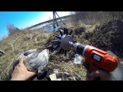 Ощипывание птицы в домашних условиях видео