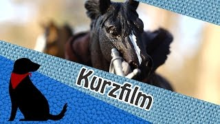 Download lagu KURZFILM ERREN und das Schattenpferd von Risora MP3